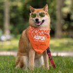 aspca summer dog