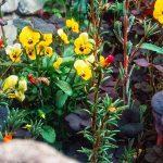 adopt a pot flowers